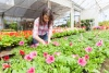 local businesses are blooming with CFCU